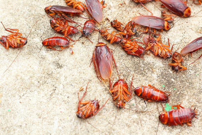 Уничтожение тараканов и выведение тараканов из помещений